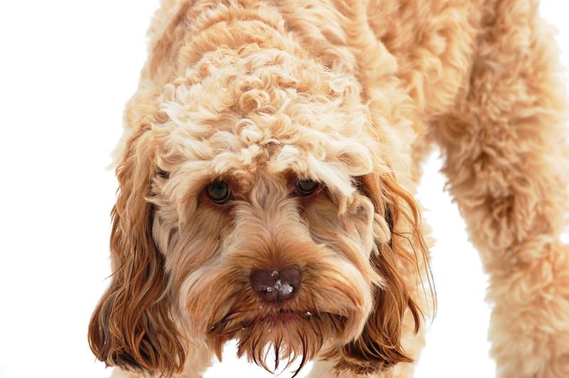 Shutterstock.com/K. Sweet